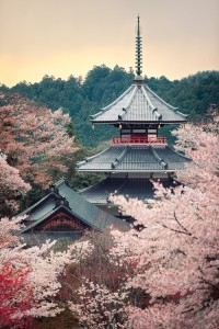 Cherry tree in full bloom Kinpusenji pagoda, Mount Yoshino, Nara, Japan