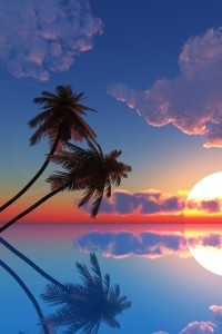 Palm Trees with Sunset in Hawaii