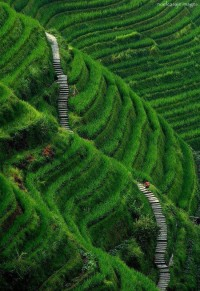 Stairway to Heaven, Longsheng, Guilin County, China
