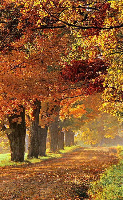 Wonderful Autumn in Vermont, USA