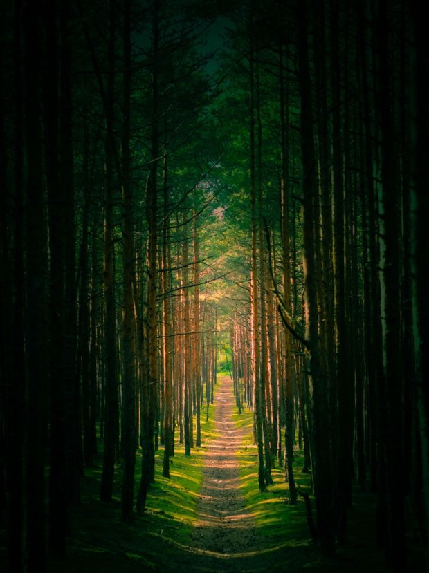 A Path Out of Darkness