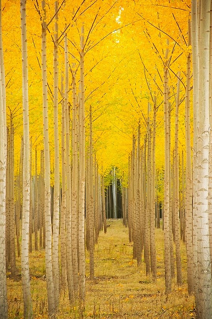 Aspen Cathedral, Vail, Colorado, USA