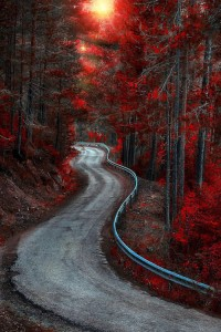 Autumn Road, Bosque Country, Spain