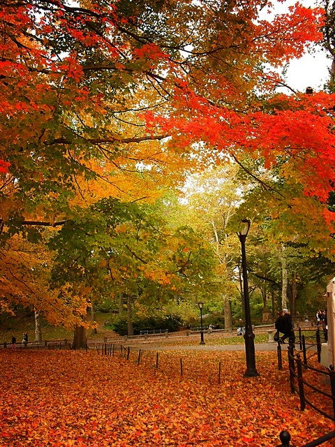 Autumn in Central Park, New York City, USA