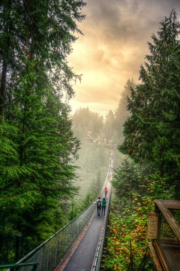 Foggy Sunrise in Capilano Suspension Bridge, British Columbia, Canada