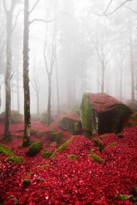 Red Forest, Lombardy, Italy