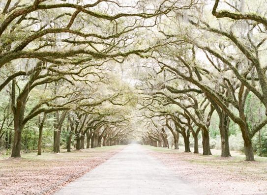 Wormsloe Plantation, Savannah, Georgia