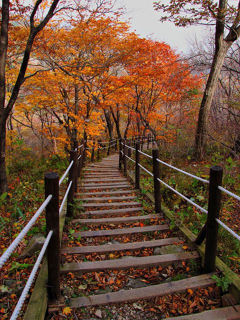 Fall leaves on the path to Baemsagol valley in Jirisan National Park, South Korea
