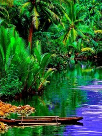 Harmonious Existence on The River, Siargao Island, Philippines