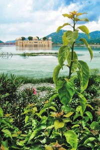 Jal Mahal, Lake Palace Hotel, Man Sagar Lake, Jaipur City, India