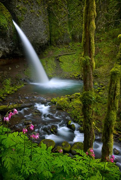 Ponytail Falls, Columbia River Gorge, Oregon, USA