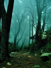 The Mystic Forest, Sintra, Portugal