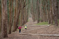 "Walking the ""Lover's Lane"" trail and Wood Line in the Presidio National Park"