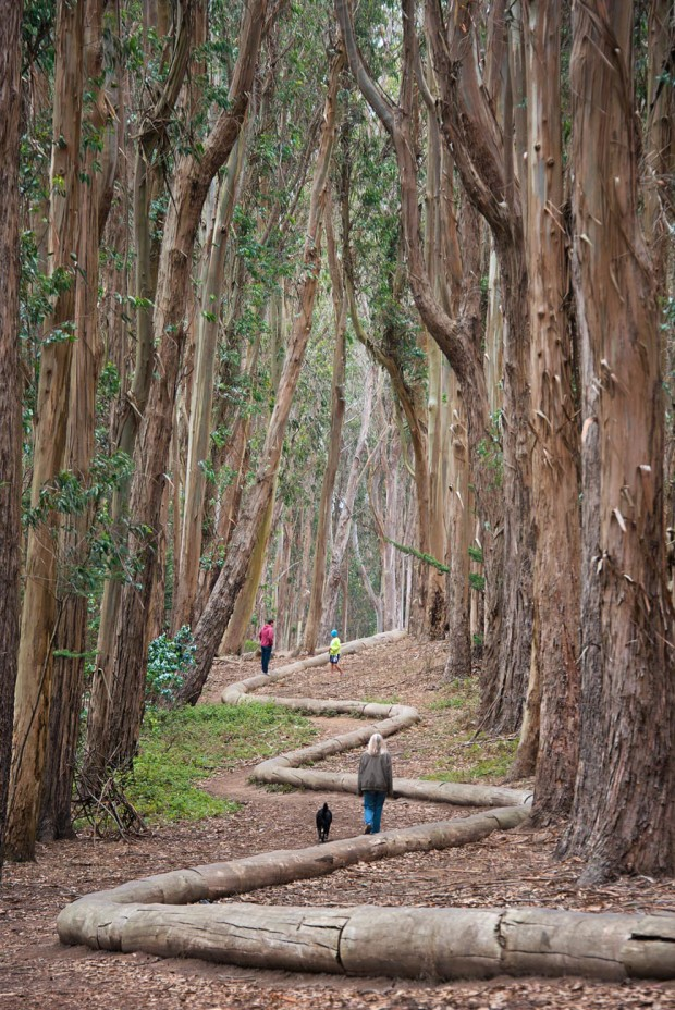 """Walking the """"Lover's Lane"""" trail and Wood Line in the Presidio National Park"""