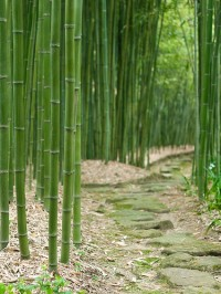 Bamboo Labyrinth, Japan