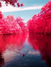 Cherry River, West Virginia, USA