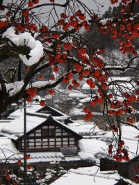 Persimmon and Snow Scene, Japan