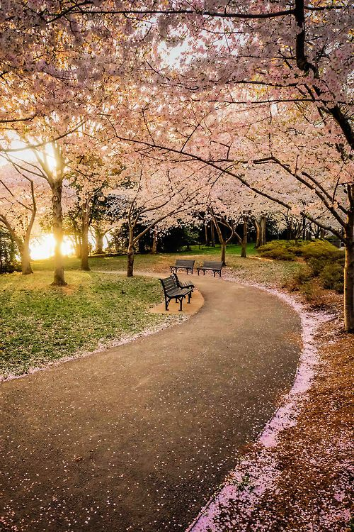 Walking path, Tidal Basin, Washington DC, USA