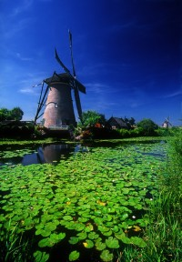 Windmill and lily pads, Kinderdijk, Netherlands