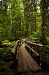 Forest Bridge, Oregon, USA