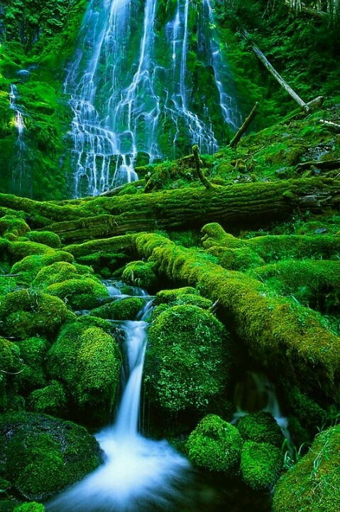 Proxy Falls, Oregon, USA