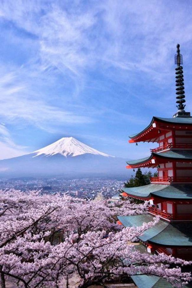 Fuji and Cherry Blossons, the World Heritage, Mt. Fuji, Japan