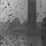 Pigeons in Piazza San Marco on a rainy day with St. Mark's Basilica in the background, by Dmitri Kessel (1952)